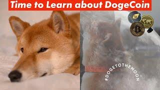 What Is Dogecoin And How To Buy It (Beginner Friendly)