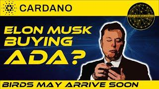 Elon Musk Buying Cardano (ADA)?  | Cardano Is Going To Launch  | Cheeky Crypto