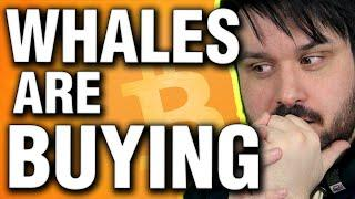 Whales Are Buying Bitcoin Under $50k – Here's Why